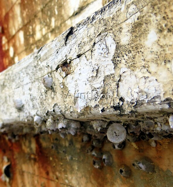 Lichen and Barnacle Shells by AuntDot