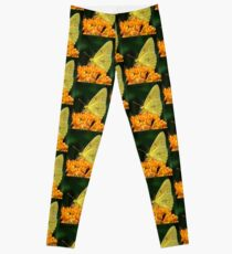Cloudless Sulphur On Butterfly Weed Leggings