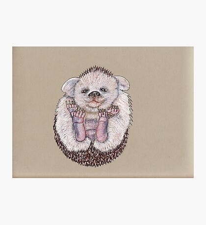 The Baby Hedgehoglet Photographic Print