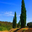 Provence Flames by jean-louis bouzou