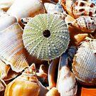 Beach Treasures by Lisa Kent