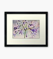 Agapanthus Sparkle Framed Print