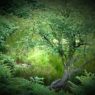 A tree near Cut Throat Bridge. by David Tovey