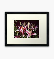 Lily Morning Framed Print