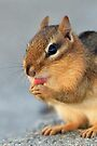 Chipmunk Cleaning Paws by WorldDesign