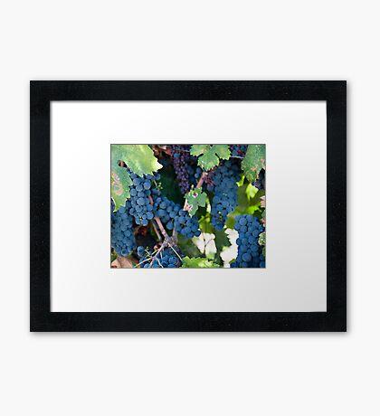 Grapes on the Vine I Framed Print