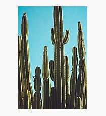 At the Cactus Garden Photographic Print