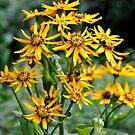 yellow marsh flowers by Karen  Betts