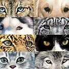 Animal Eyes - Tierblicke by Nicole Zeug