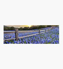 Texas Bluebonnets along a Woodrail Fence Panorama Photographic Print