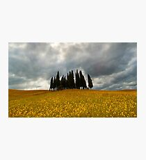 Cypresses Photographic Print