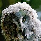 Hello! I am Owl... who are you..? by Bluesrose
