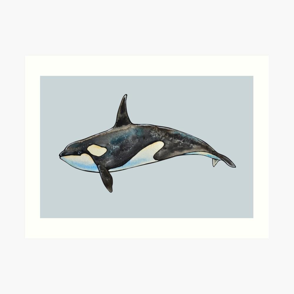 Orca on blue Art Print