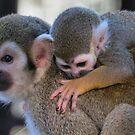 Squirrel monkey mom by Linda Sparks