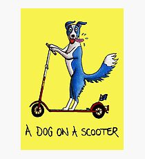 A Dog on a Scooter Photographic Print