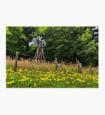 Windmill And Flowers Photographic Print