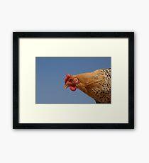 Sicilian Buttercip chicken Framed Print