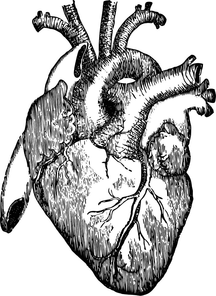 Anatomical Heart By Truantmuse Redbubble