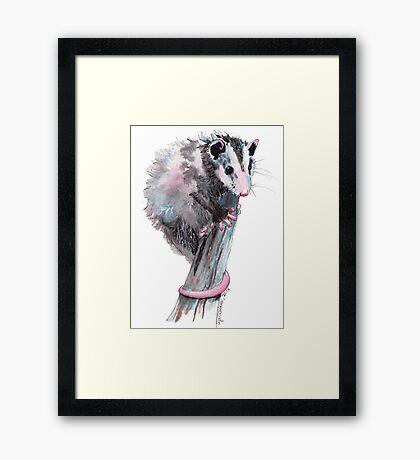 Virginia Opossum Baby Framed Print
