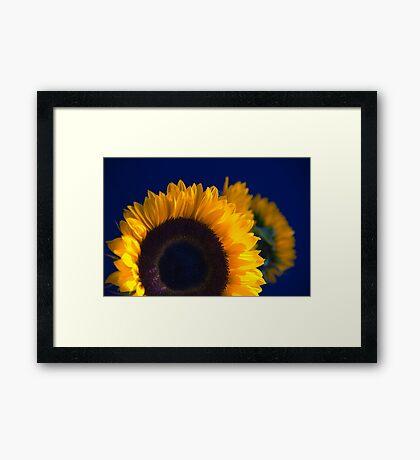 Sunflowers on blue Framed Print