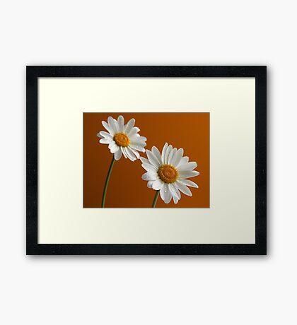 Daisies on orange Framed Print