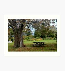 Picnic Table under an Ancient Tree Art Print