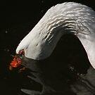 Goose feeding by turniptowers