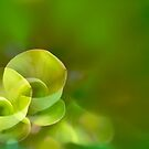 etude in green by lensbaby