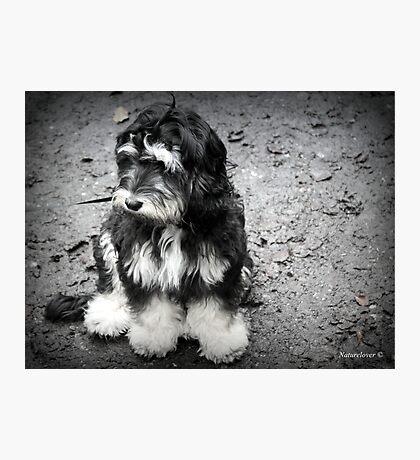 Glum Pup Photographic Print