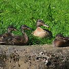 Mother and ducklings by turniptowers