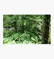 Lush Southern rainforest Photographic Print