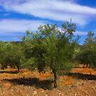 Olive Tree by jean-louis bouzou