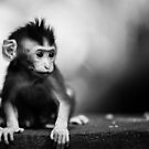 monkey baby by Bernie Rosser