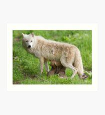 Arctic wolf feeding pups Art Print
