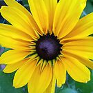 yellow daisy by geot