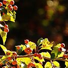 Hawthorn Berries Shout Fall by Linda Gleisser