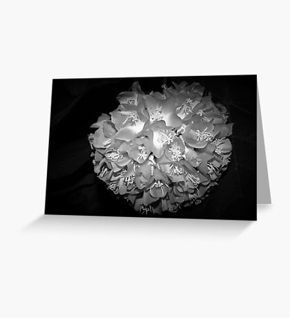 Hydrangea bloom in silver gray Greeting Card