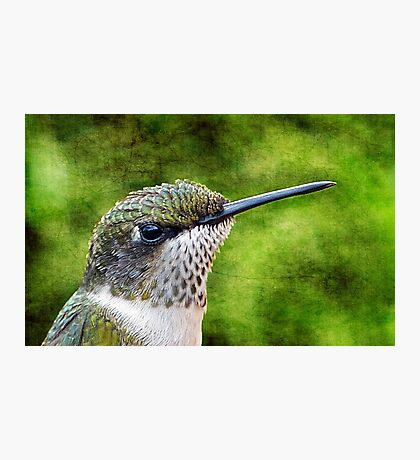 Little Hummer Photographic Print