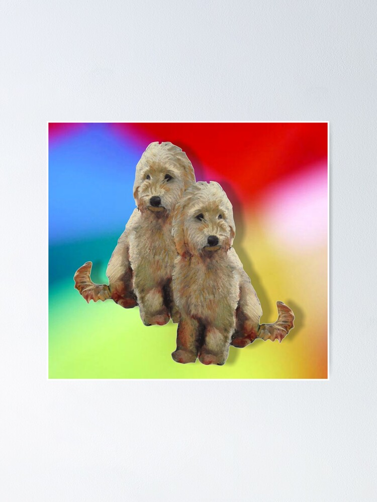 Dogs Poodles Golden Doodle Dogs On Multi Colour Background Poster