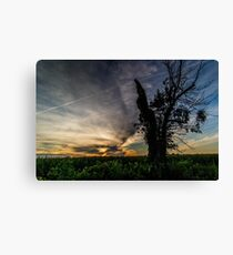 Old Tree At Sunset Canvas Print