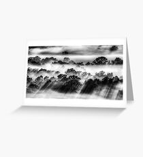 Treetop sunbeams, Ovens Valley Greeting Card