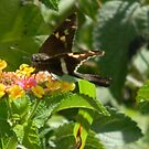 New Moth? by Navigator