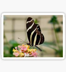 Zebra Longwing Butterfly on Lantana Sticker