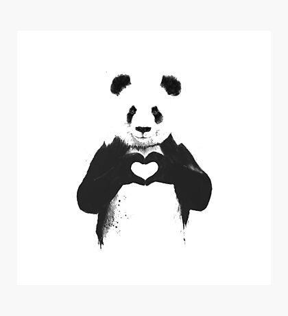 love panda Photographic Print