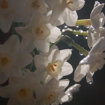 Daffodil 2 by JackBridges