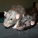 Dumbo rats by mindgoop