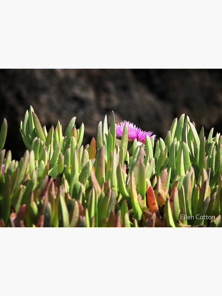 Sea of Ice Plants by ellcot
