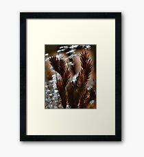 Afternoon Ferns Framed Print