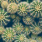 Cactus by OLIVIA JOY STCLAIRE