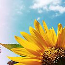 Summer Sunflower by OLIVIA JOY STCLAIRE